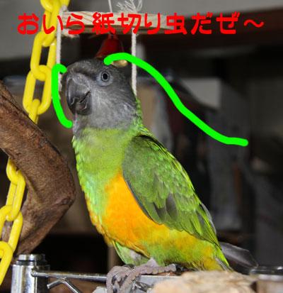 2_Chappy.jpg