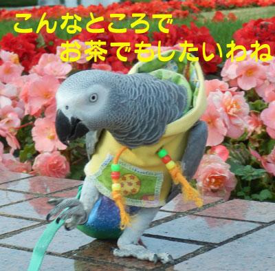 7_kannna5.jpg