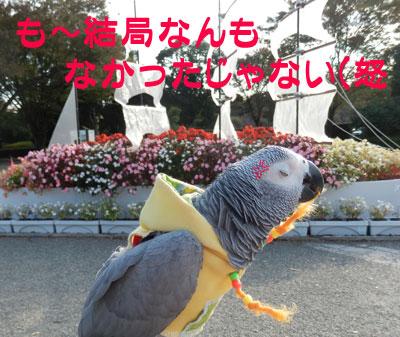 9_kannna7.jpg