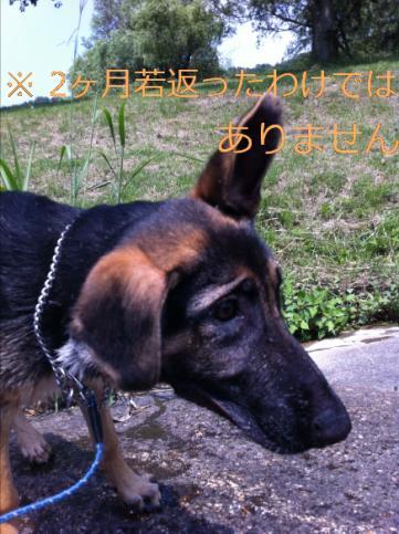 編集IMG_5998