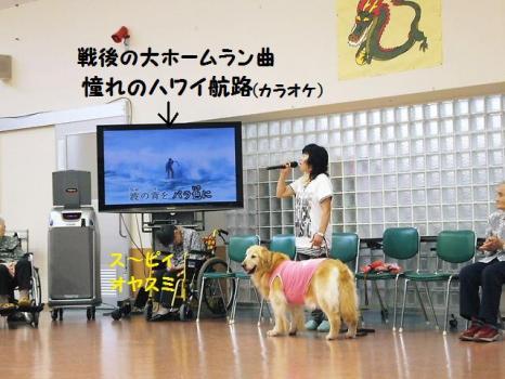セラピー DOG