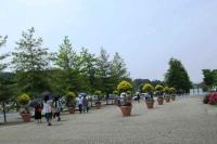 花フェスタ園内1