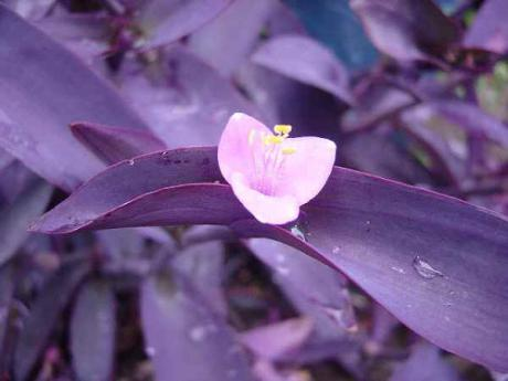紫御殿 (むらさきごてん)