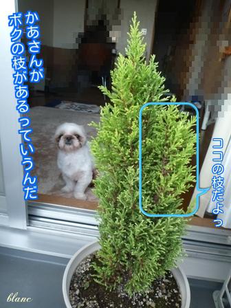 記念樹(1)