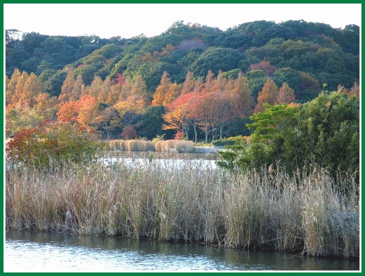 佐鳴湖の秋 2014 11 27 046a