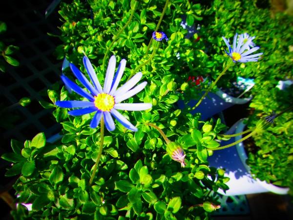 blue013.jpg