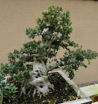2011-10-08 華2553
