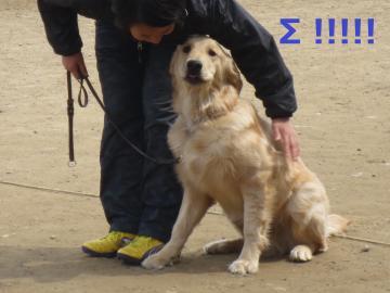 IMG_1167_convert_20130323191748.jpg
