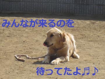 IMG_1193_convert_20130331211503.jpg