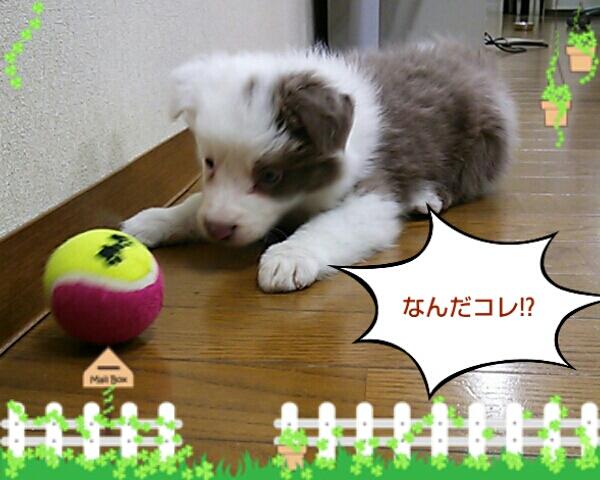 fc2blog_20121108131316726.jpg