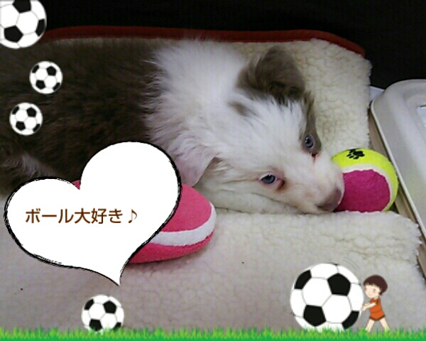 fc2blog_2012110813140442e.jpg