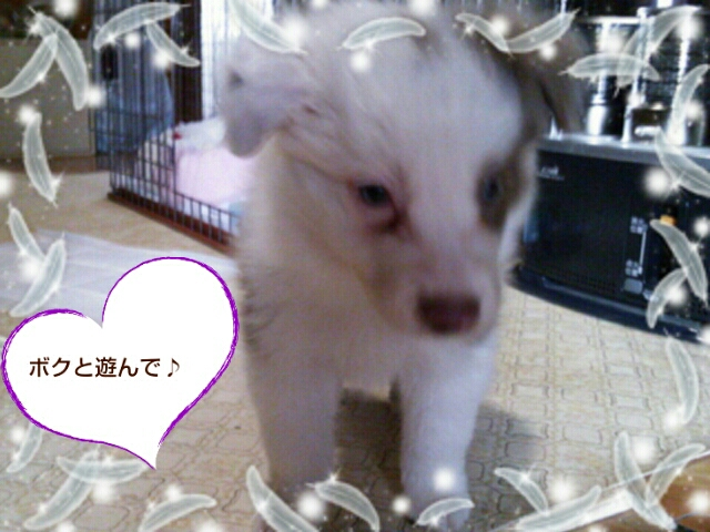 fc2blog_20121112122935500.jpg