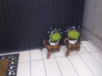 花(ブルー)