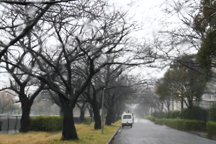 a_In_the_Rain.jpg