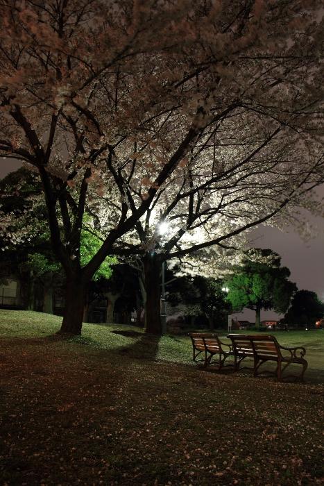a_YoruniChire.jpg