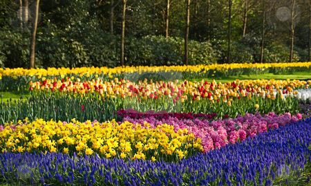 「flower bed(フラワーベッド)」  2