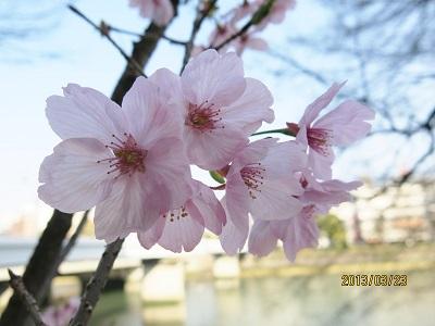 京橋沿い8