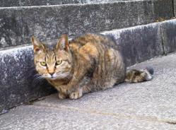 護国寺の猫(文京区音羽)