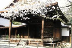 靖国神社 桜 標本木