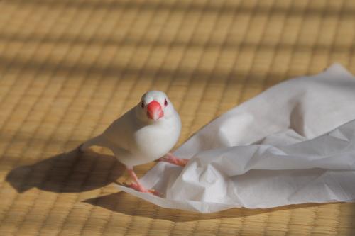 tissu de asonnde moratta (1)