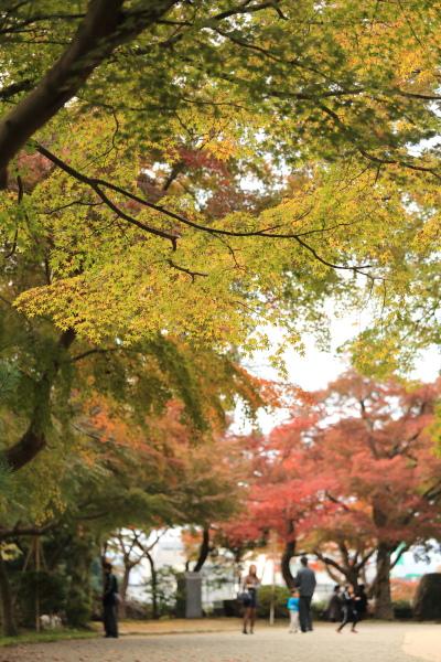 kotoshi no kouyoha (3)