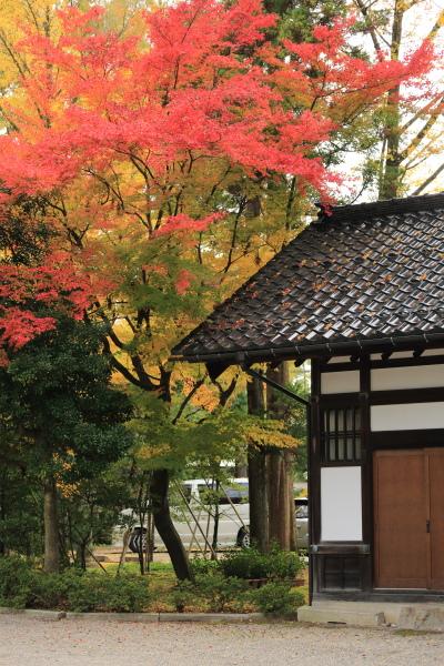 kotoshi no kouyoha (12)