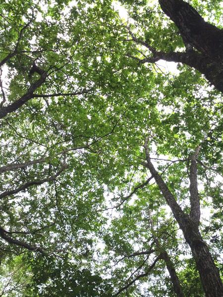 CameraZOOM-2012080214140484.jpg