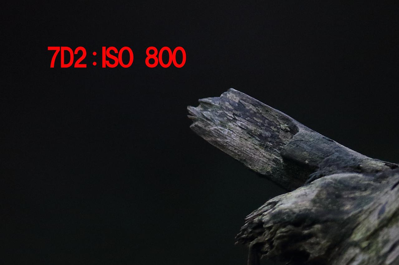 7D2_0008p800.jpg