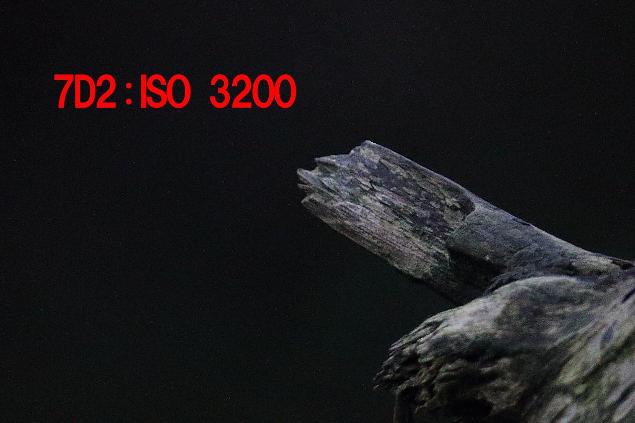 7D2_0012p3200.jpg