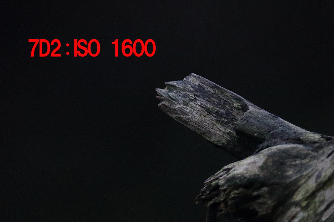 7D2_0058p1600.jpg