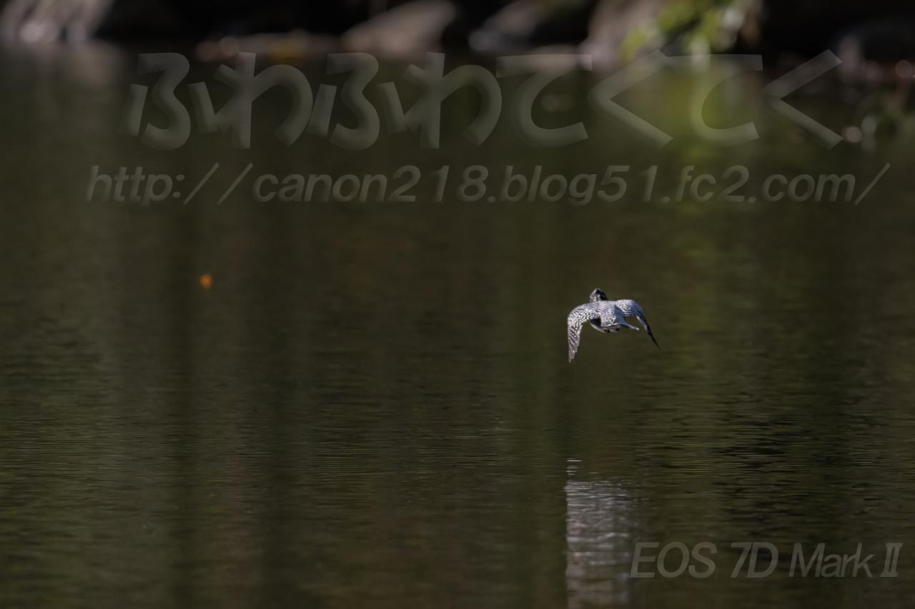 7D2_1319LR_1411.jpg
