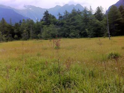 もう秋の草