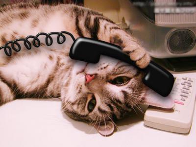 猫の手も借りたい