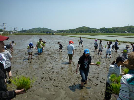 2012.05.09田植え8