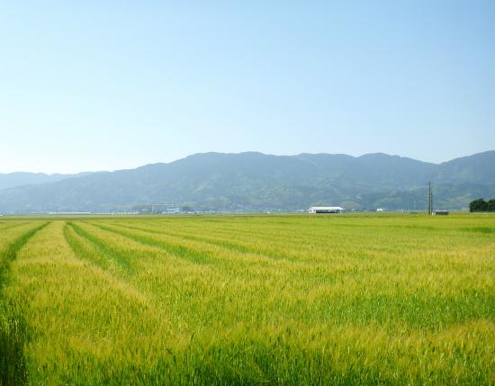 2012.05.09田植え9