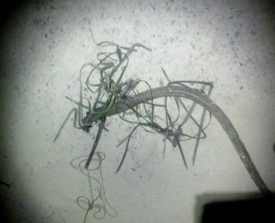 2012.08.03アナゴ釣り3