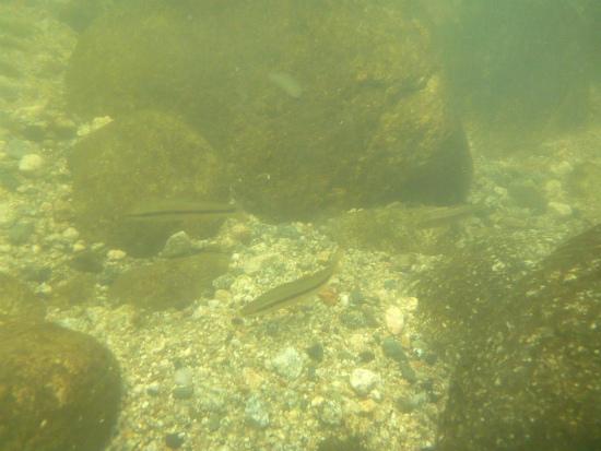 2012.08.08水の中5