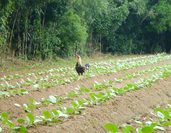 2012.09.10野鶏2