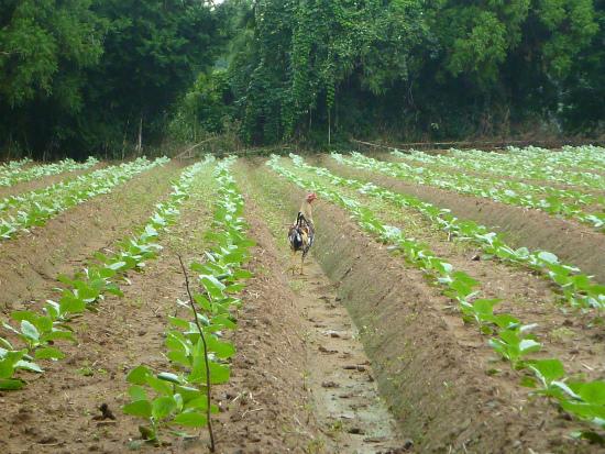 2012.09.10野鶏