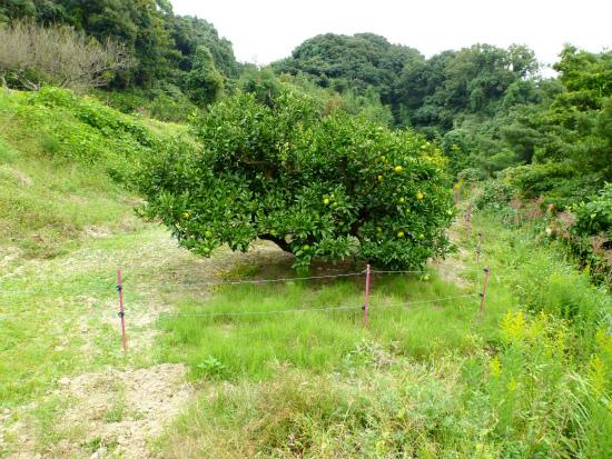2012.10.16ネギ畑2