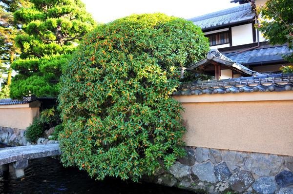 20121021kyo002-1.jpg