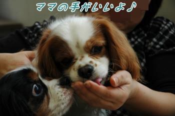 DSC_0040_convert_20130322101155.jpg