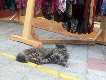 カシュ猫さま1