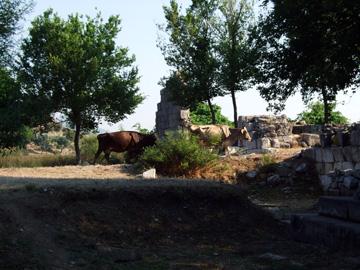 カウノス 下の遺跡 モニュメントの向こうを牛が通る