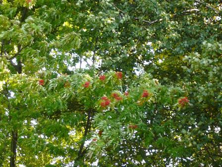 公園の木も赤く