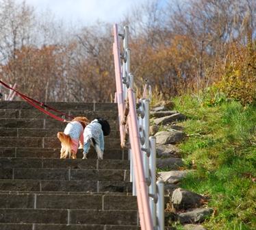 仲良く階段登り