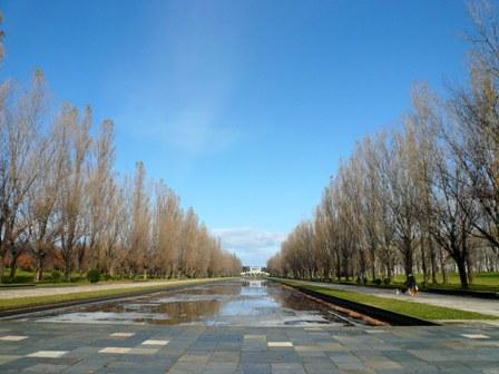 前田のポプラ並木