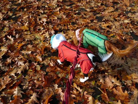 落ち葉の中を散歩