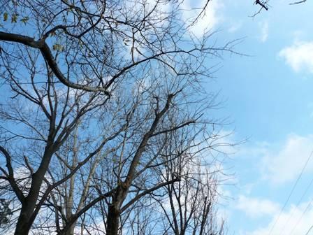 葉が落ちた木