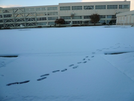 校庭も真っ白